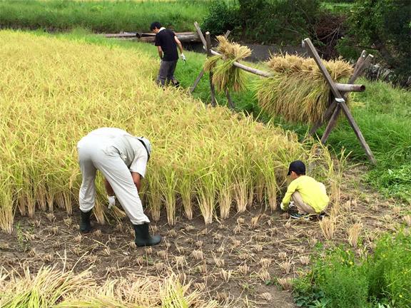 第184回 平成27年収穫の日